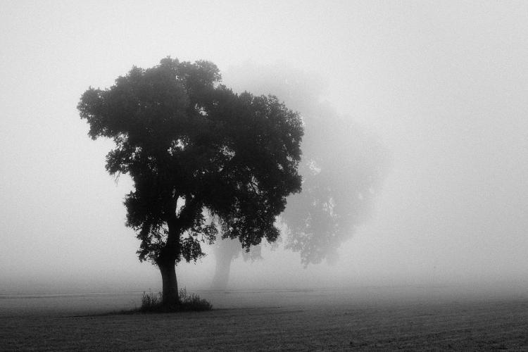 El Alma del Silencio