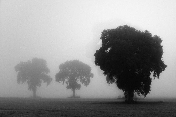 Reflexiones:El Alma del silencio